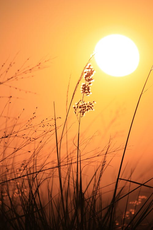 Foto stok gratis jam emas, matahari keemasan, matahari terbit