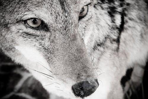 Foto stok gratis binatang buas, binatang liar, hewan buas, Hewan liar