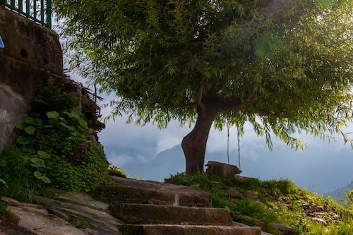 Ảnh lưu trữ miễn phí về #tree #shimla #himachal #menezs #life #nature