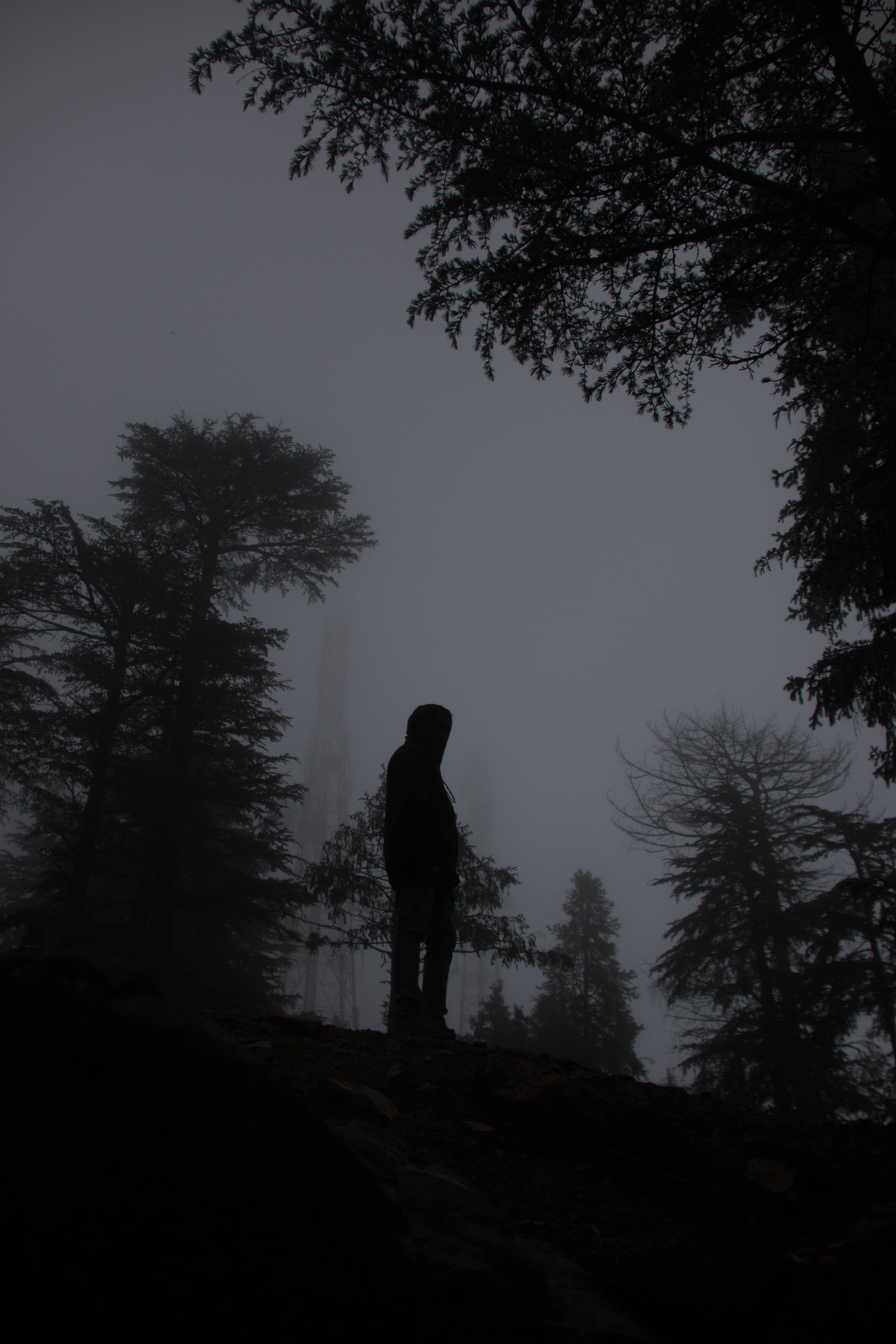 Free stock photo of #mist #man #nature #fog #shimla #india #himachal