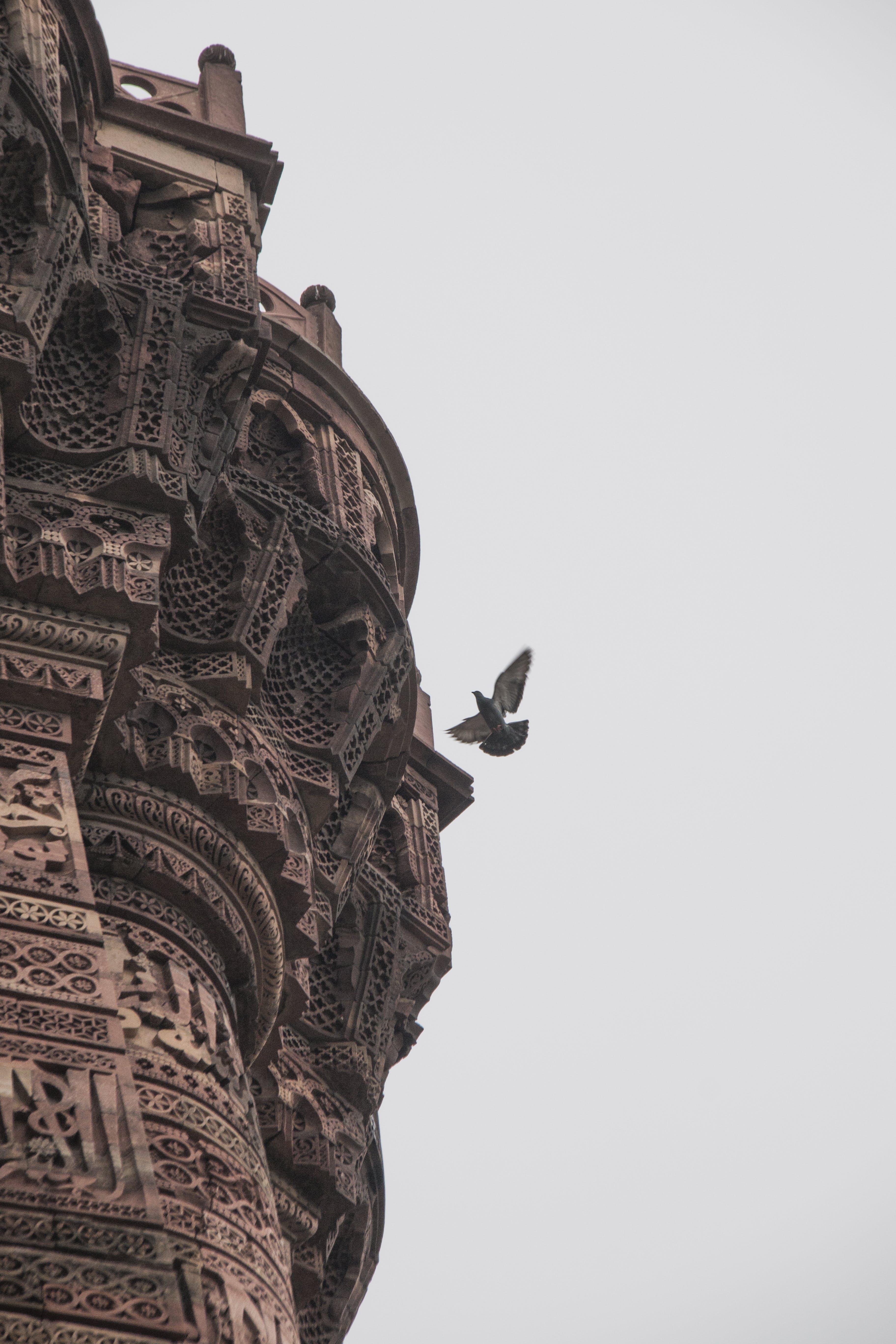 Free stock photo of #Qutub #minar #delhi #india #Dove #monument
