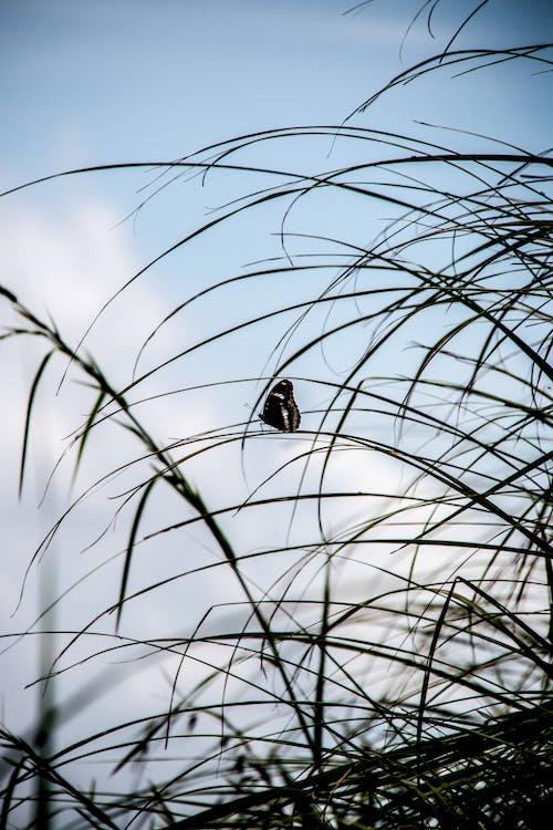 Ảnh lưu trữ miễn phí về #butoston #nature #flora