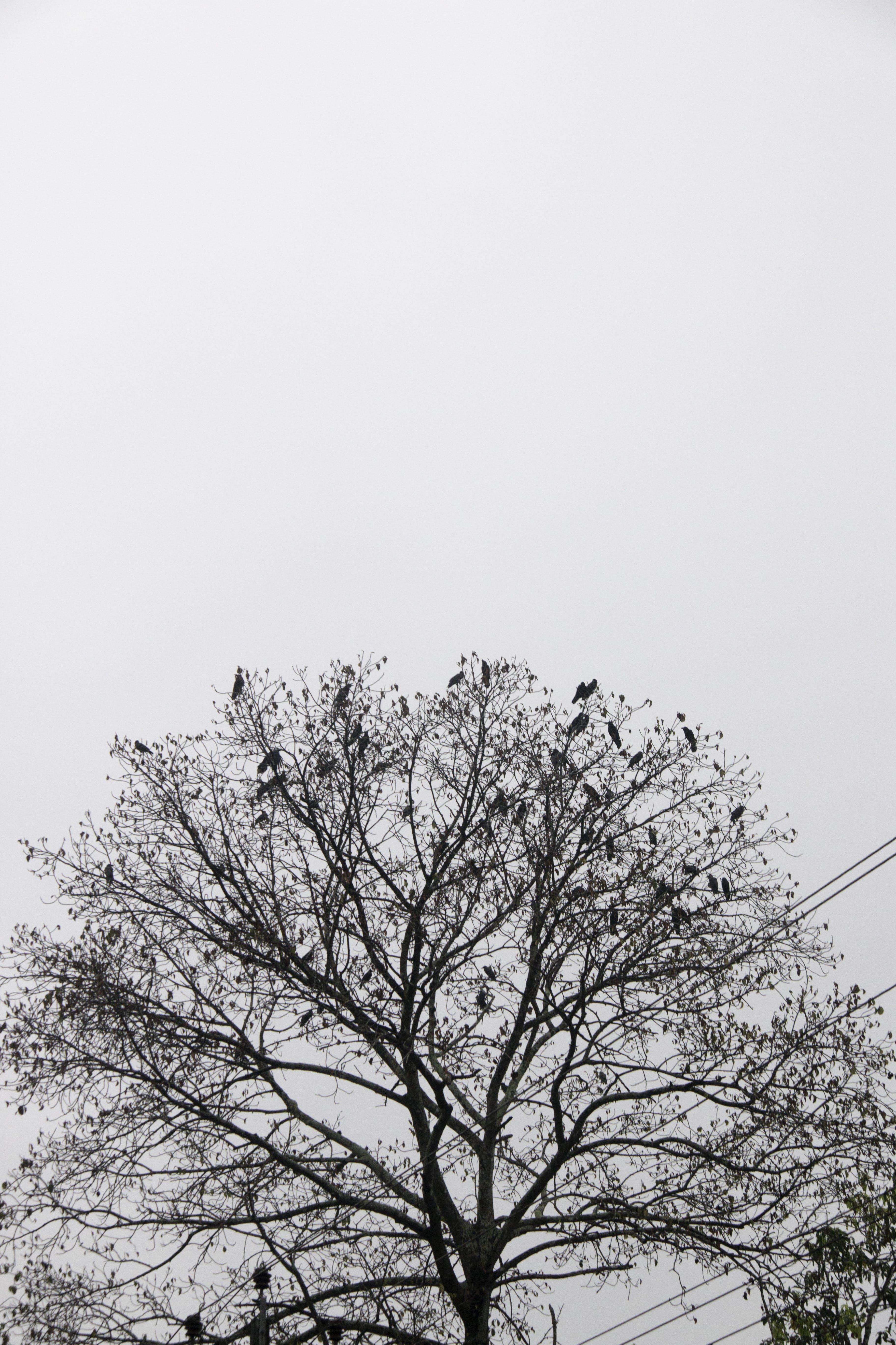 Free stock photo of #bird, #blackandwhite, #Tree