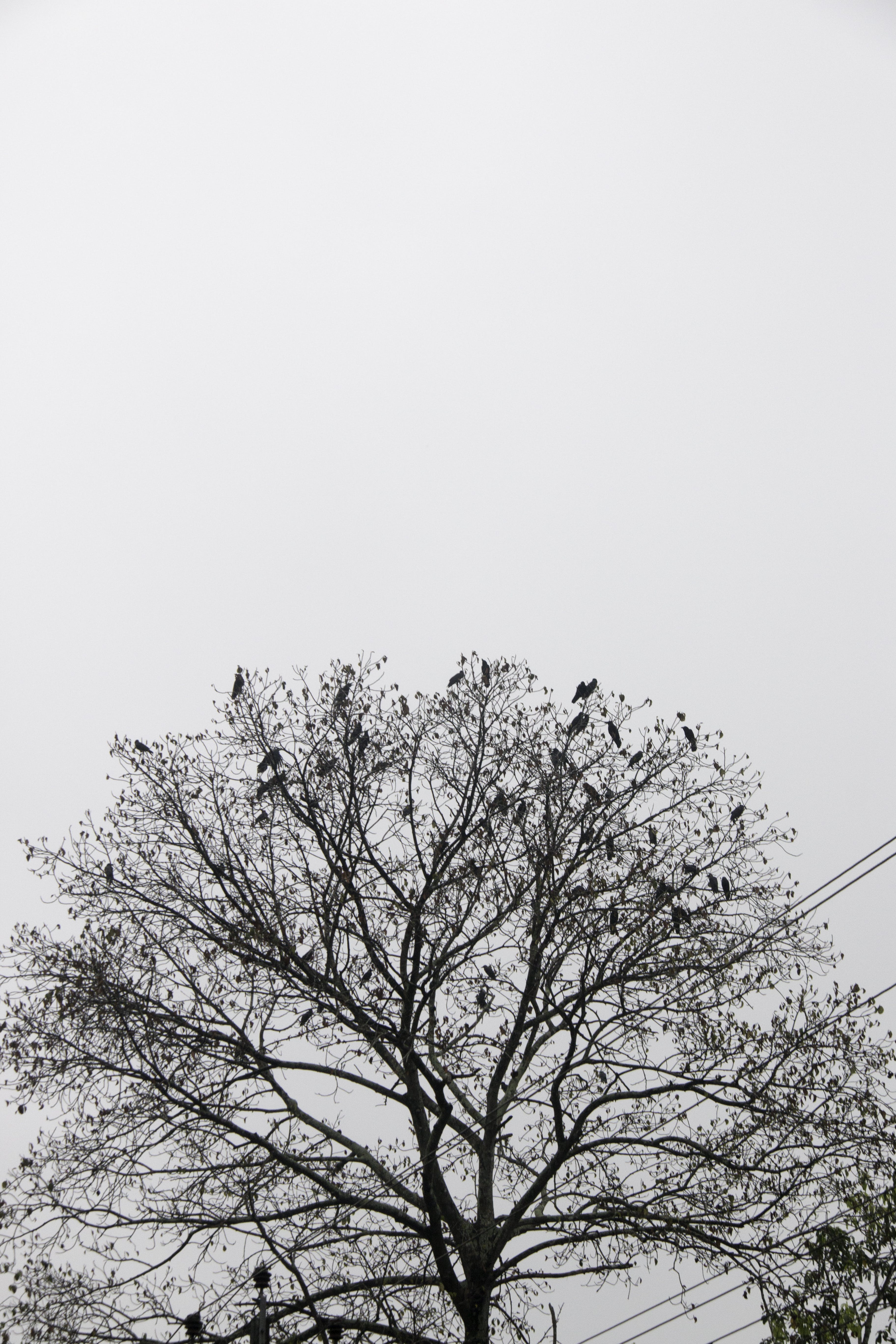 Free stock photo of #Tree, #blackandwhite, #bird