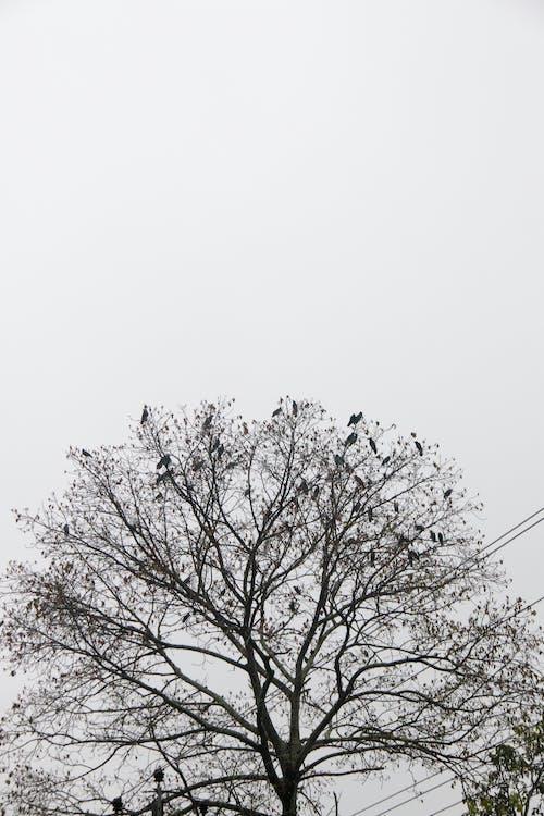 Ảnh lưu trữ miễn phí về #cây, #chim, #đen và trắng