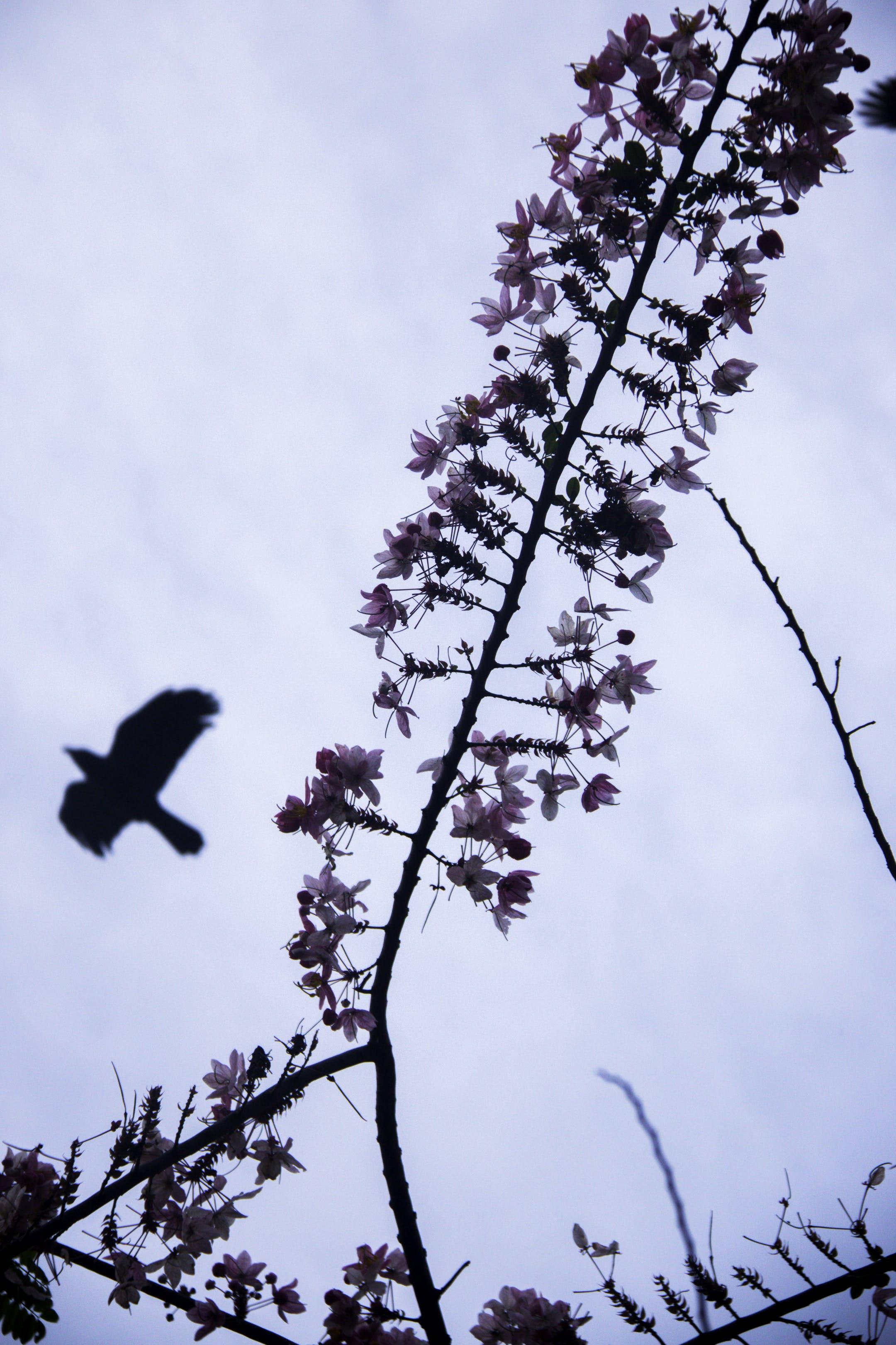 Free stock photo of #bird #flower #sky#nature