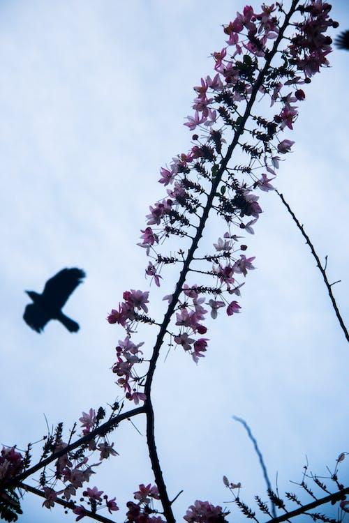 Ảnh lưu trữ miễn phí về #bird #flower # bầu trời # thiên nhiên