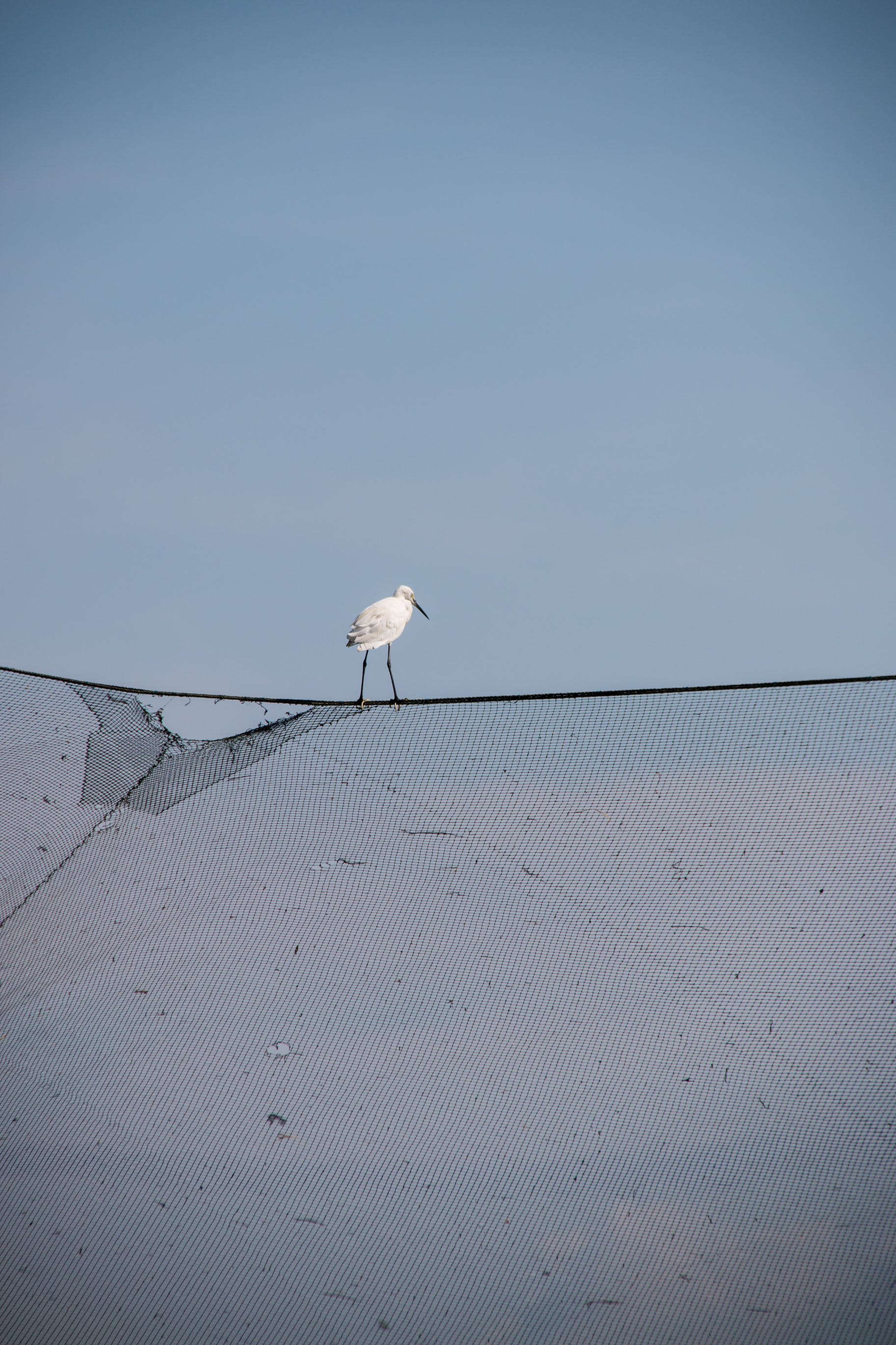 Free stock photo of #fishingnet #bird #sky