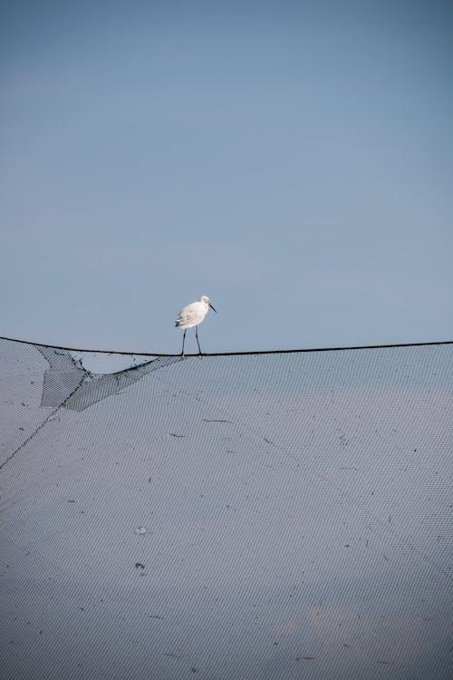 Ảnh lưu trữ miễn phí về #fishingnet #bird #sky