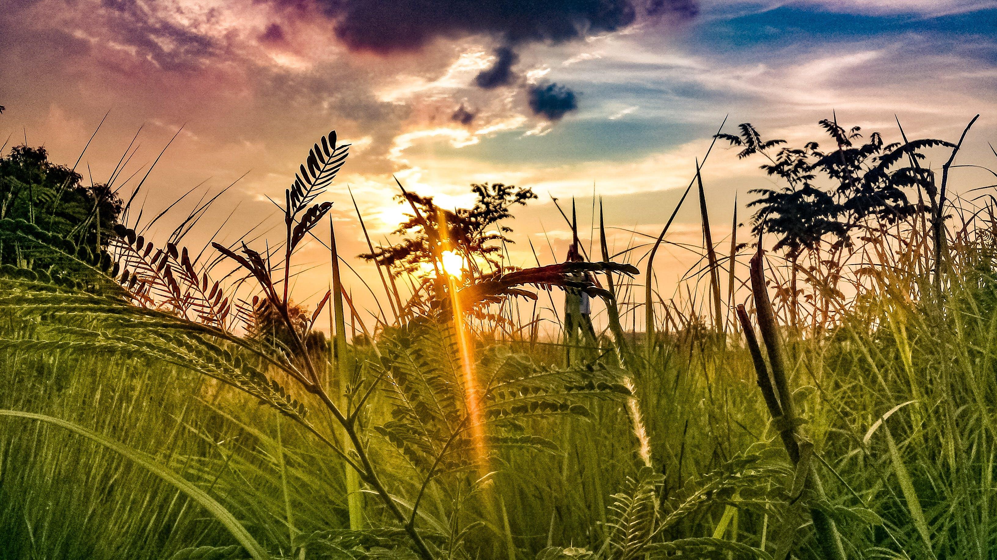 Free stock photo of nature, sunset, lifestyle, beauty