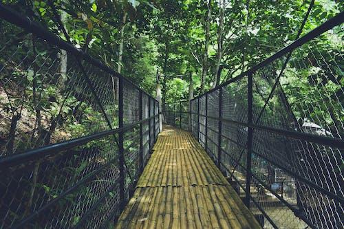竹橋 的 免費圖庫相片