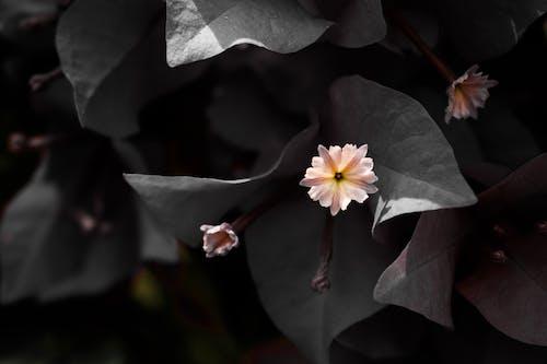 Fotobanka sbezplatnými fotkami na tému detail, detailný záber, divočina, flóra