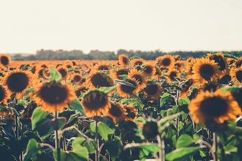 Foto stok gratis alam, bagus, berbunga, bidang
