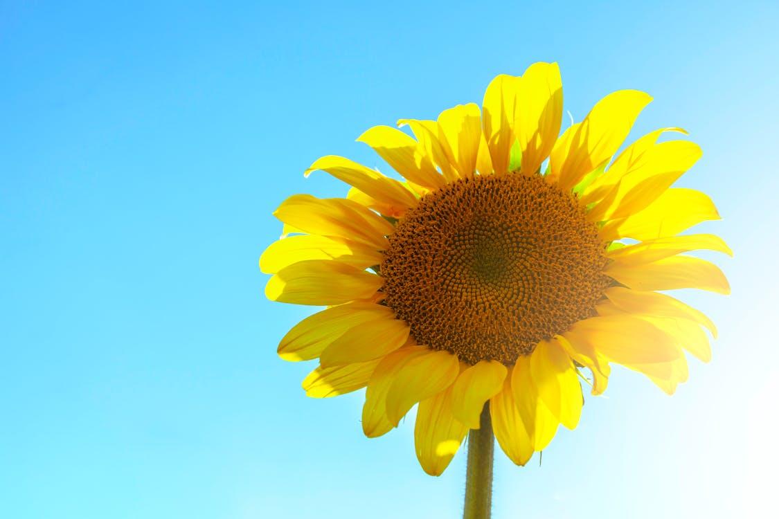 경치가 좋은, 꽃, 꽃가루