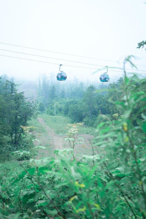 キヤノン, サハリン, スナップシード, ロシアの無料の写真素材
