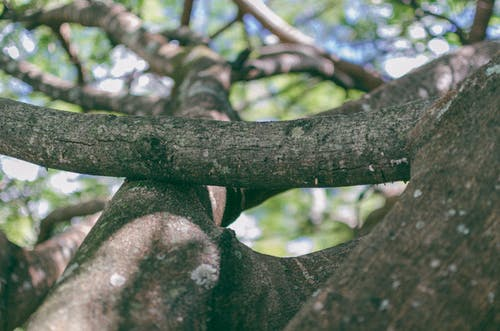 Immagine gratuita di alberi, albero, foglie, impianti