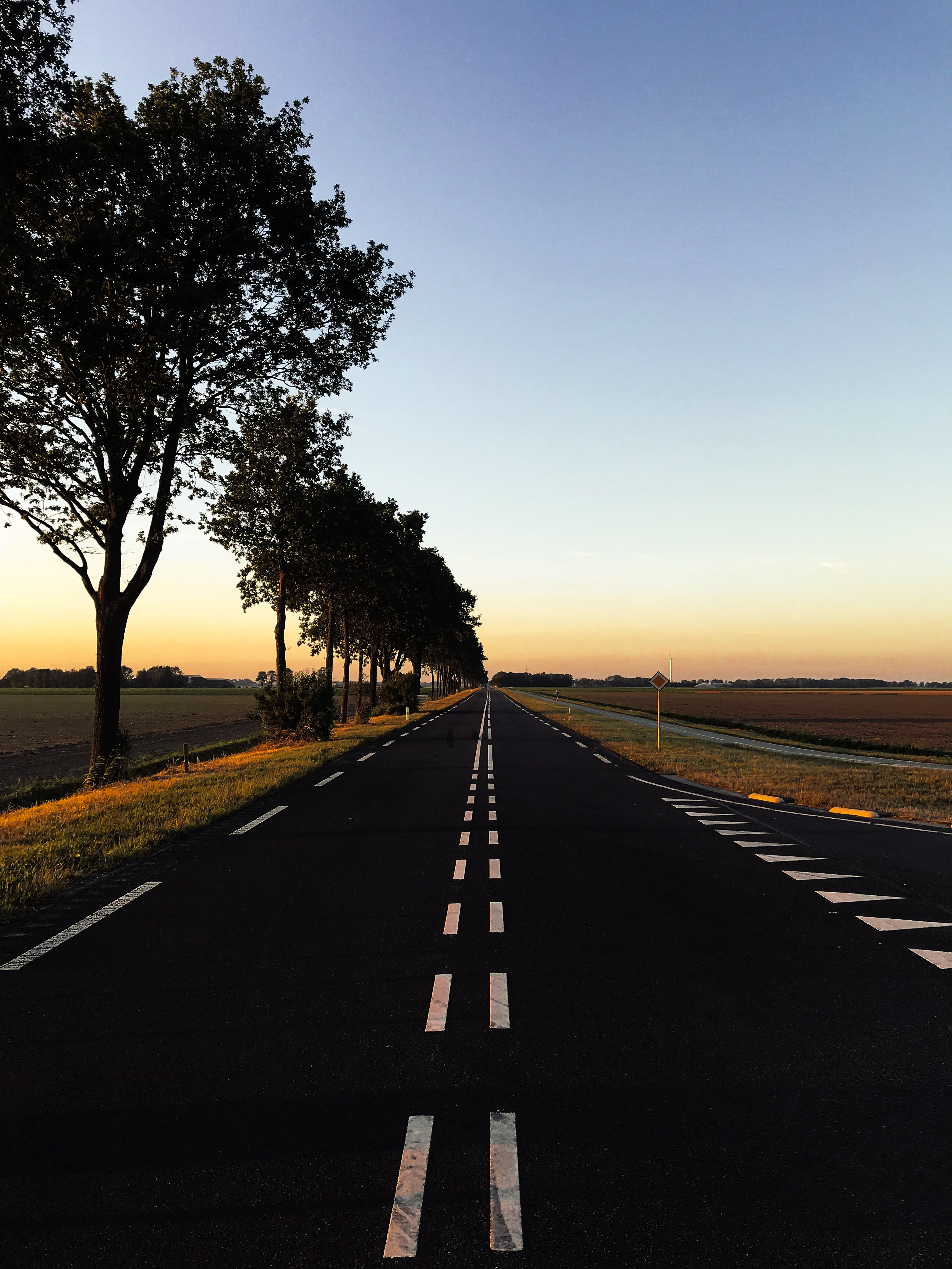 Foto profissional grátis de aconselhamento, árvores, asfalto, céu