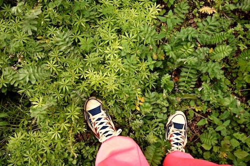 Free stock photo of female, green, ground