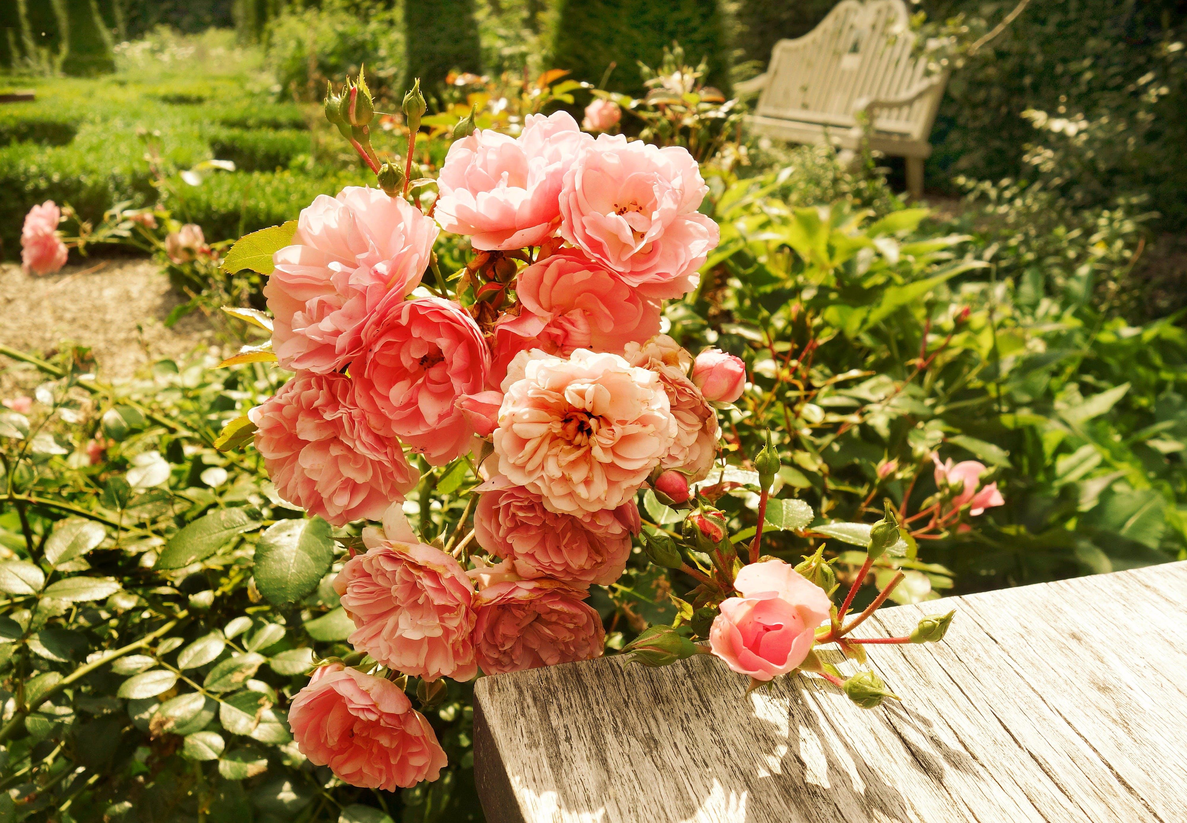 Free stock photo of sunshine, garden, plant, table