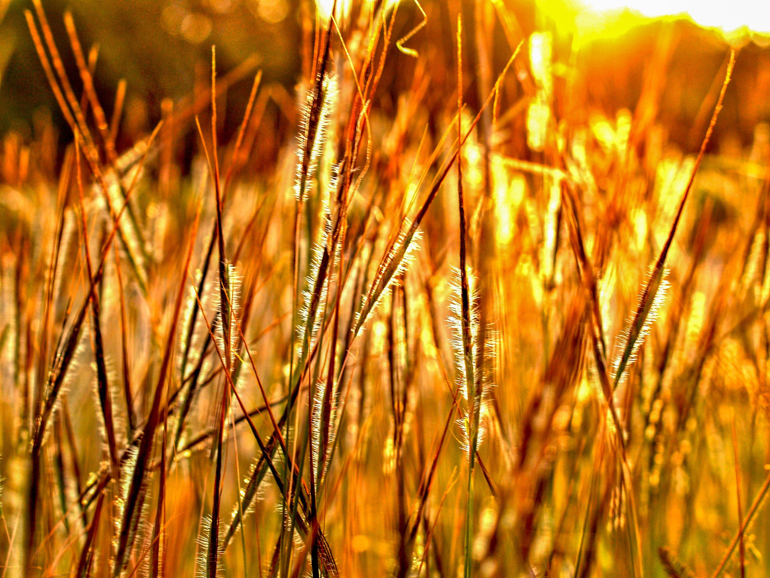 Free stock photo of nature, love, romantic, field