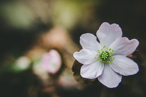 꽃, 녹색, 야생화, 자연의 무료 스톡 사진