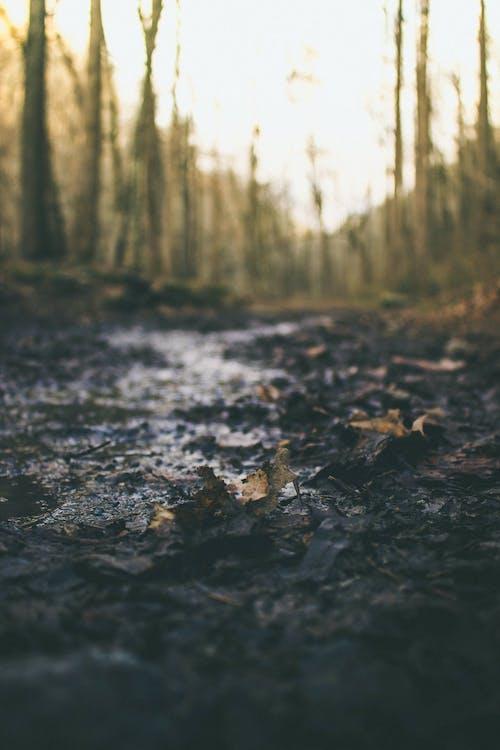 갈색, 나무, 산길, 자연의 무료 스톡 사진