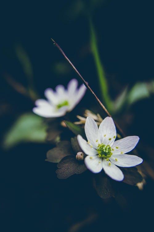 꽃, 꽃무늬, 녹색, 야생화의 무료 스톡 사진