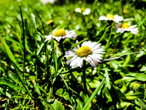 Ilmainen kuvapankkikuva tunnisteilla kevään kukka, kukka