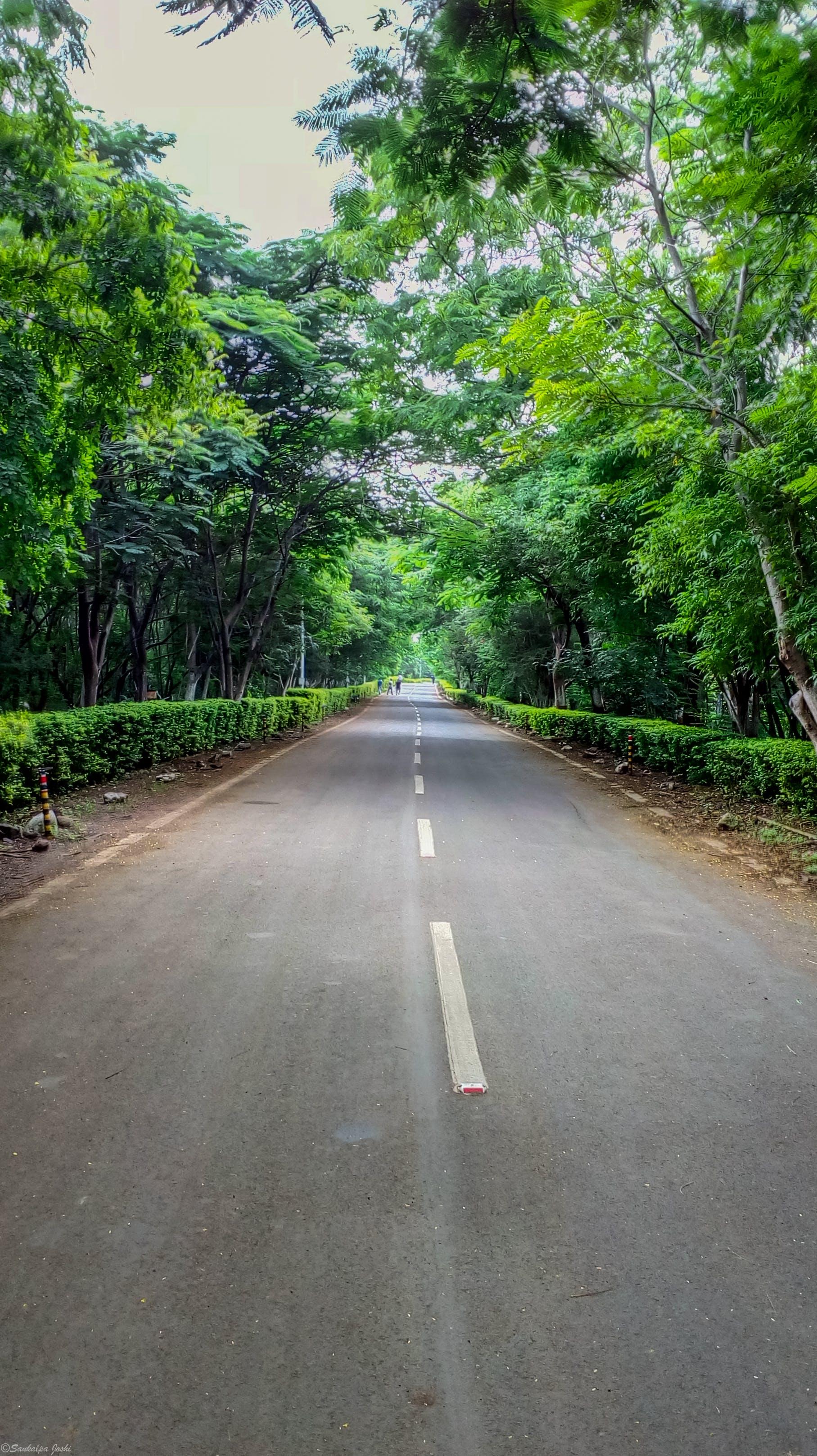 bosc, fotografia de natura, Índia