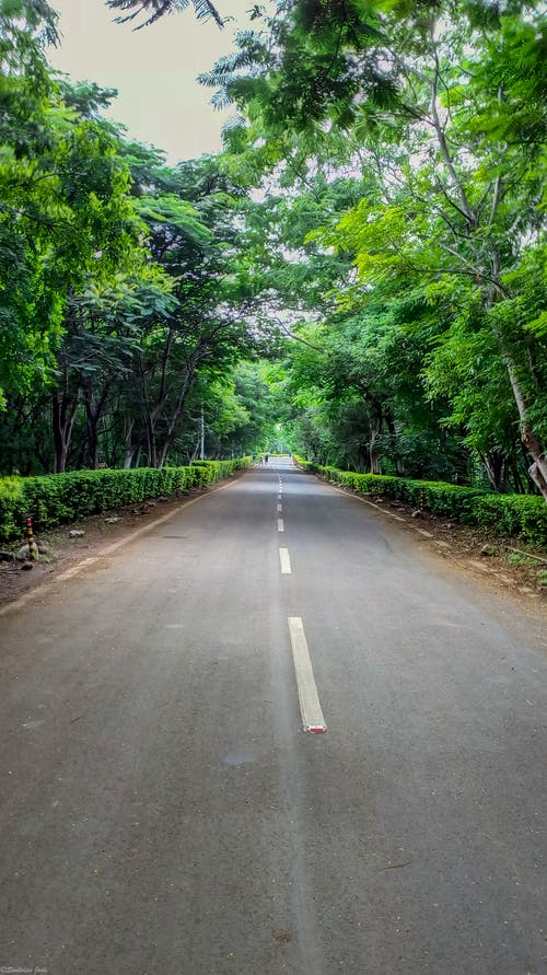 Free stock photo of forest, green, india, longroad