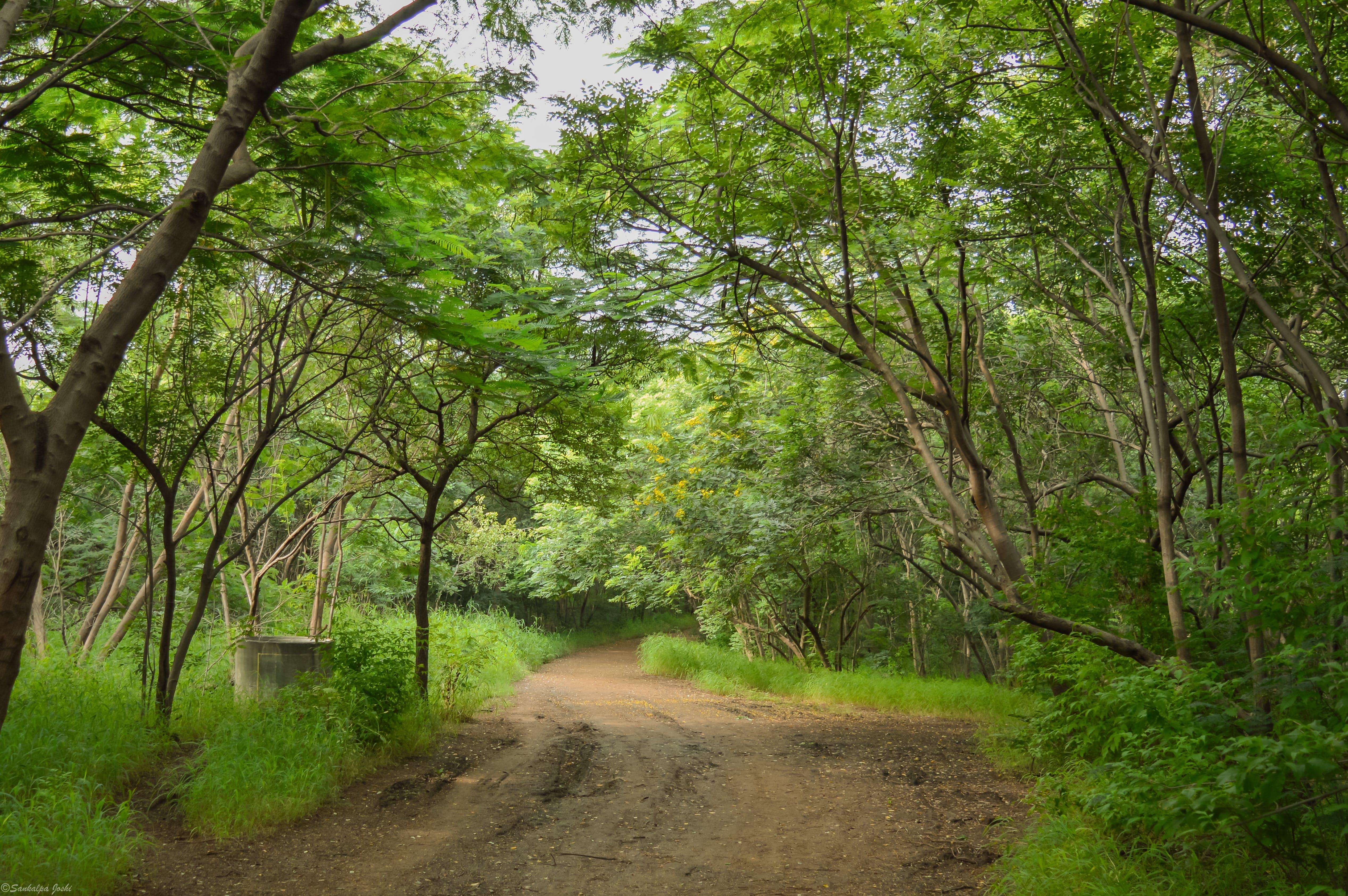 Fotos de stock gratuitas de amateur, bosque, carretera, cubierta forestal