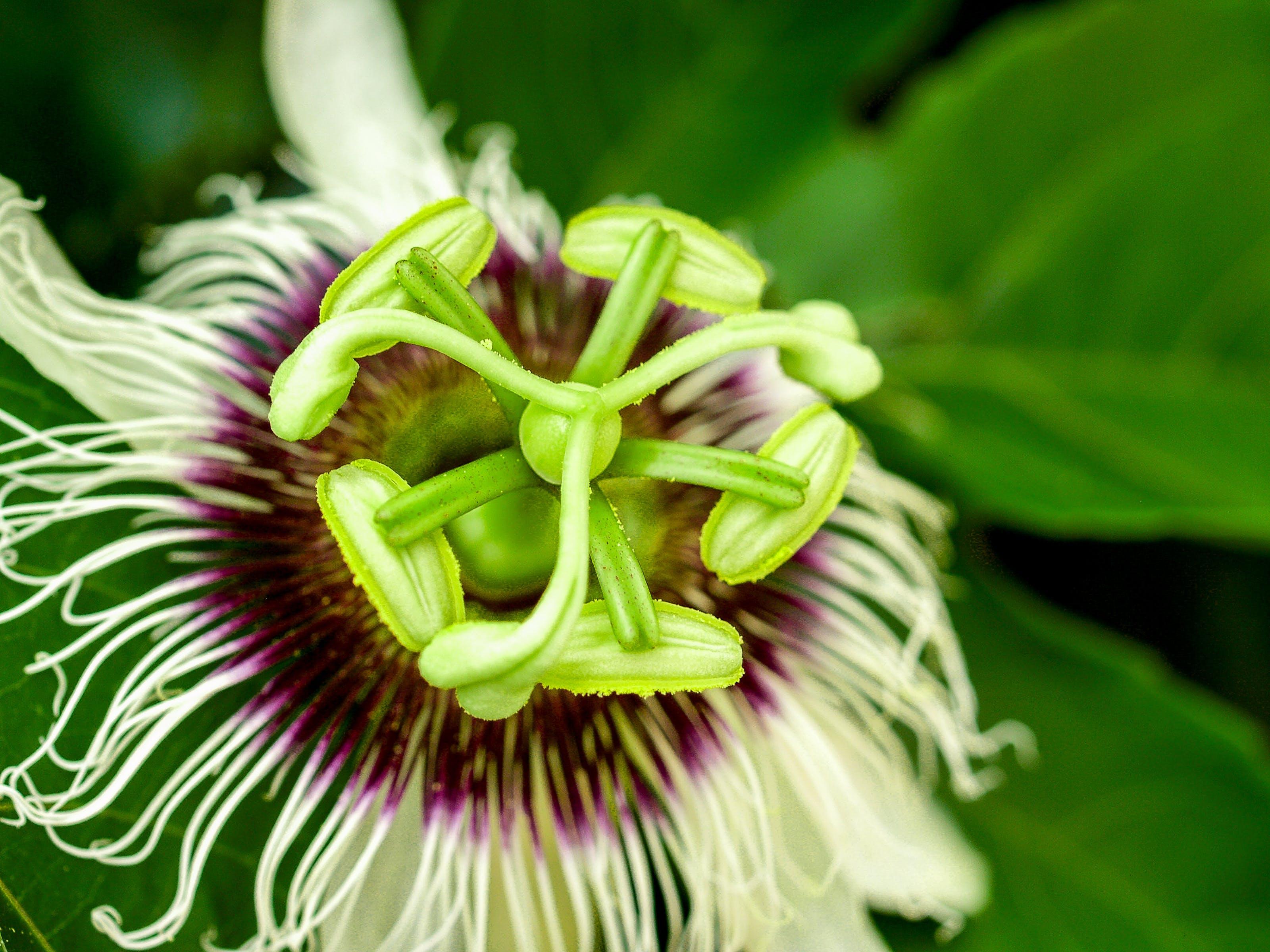 Free stock photo of nature, purple, garden, plant