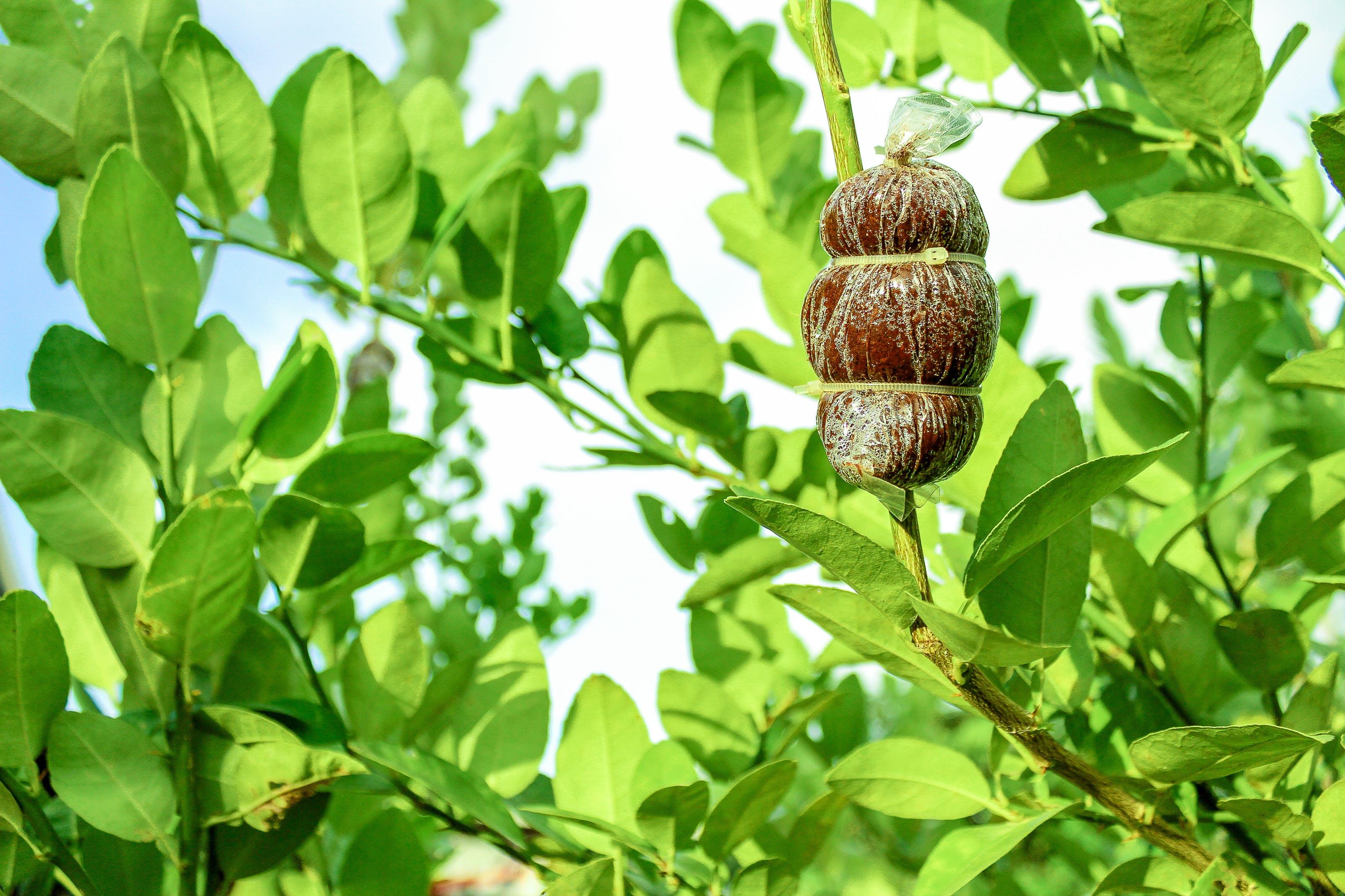 Gratis lagerfoto af dagtimer, frugt, grene, grøn