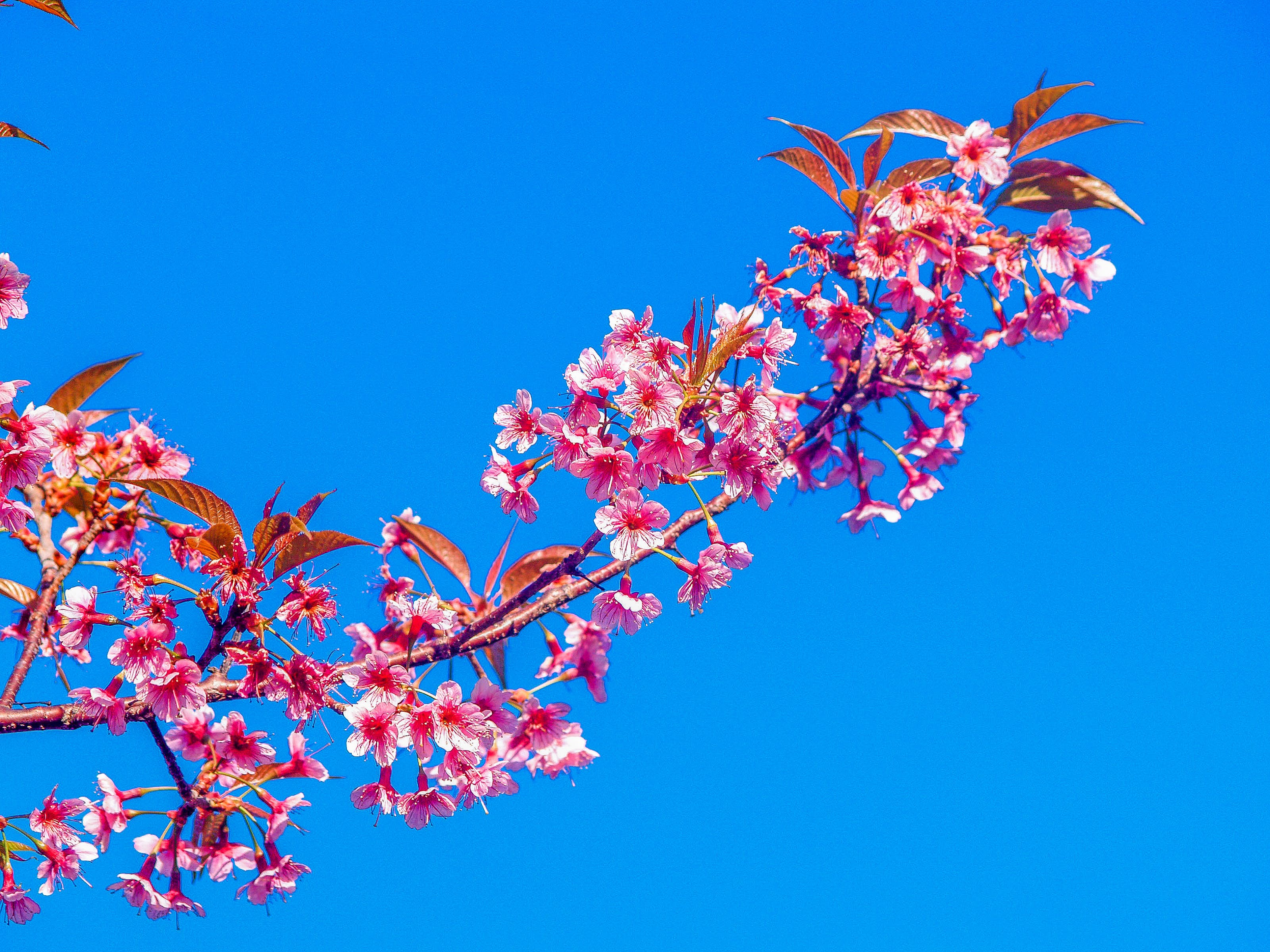 Free stock photo of background, bloom, blooming, blossom