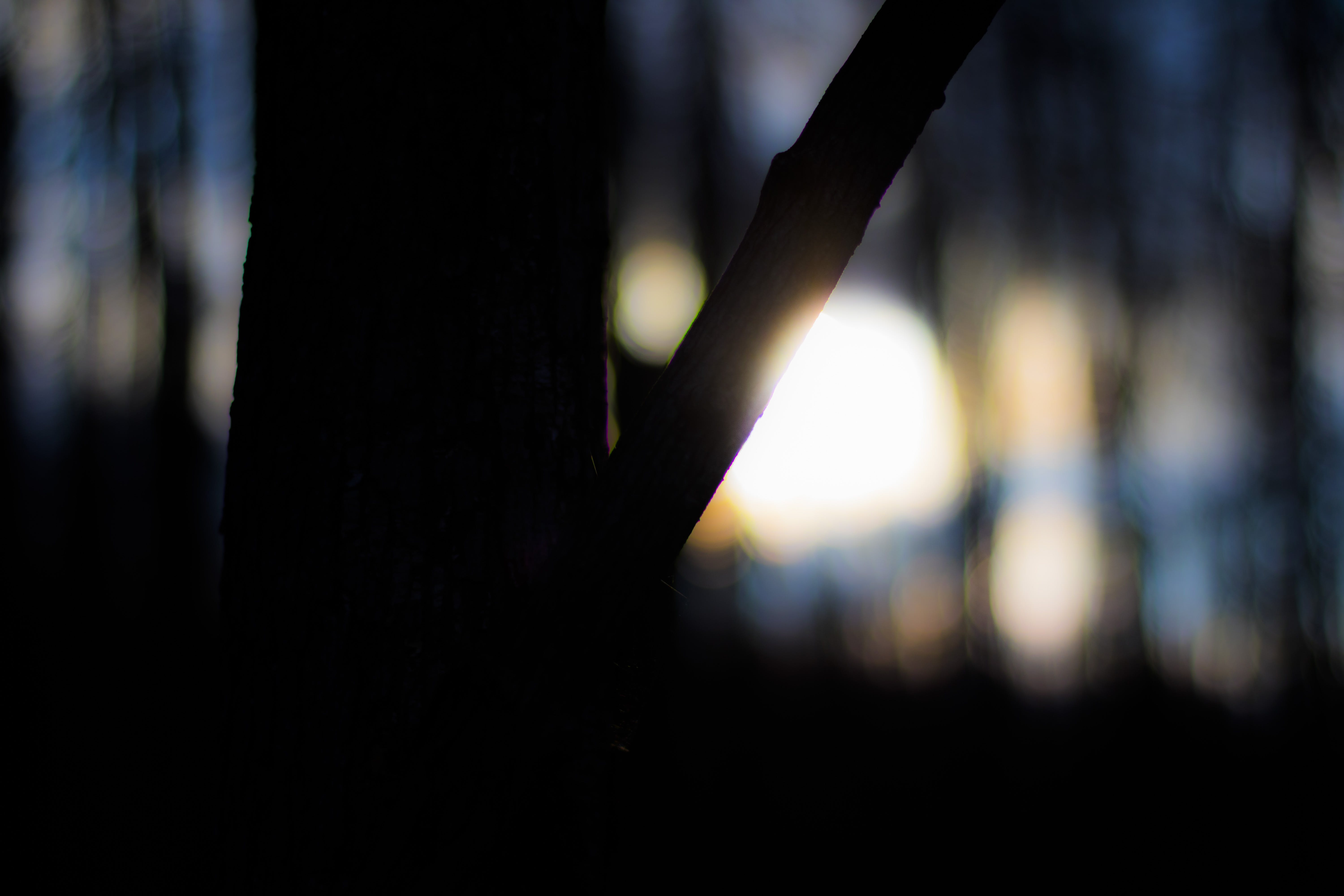 Silhouette of Tree Bokeh Photography