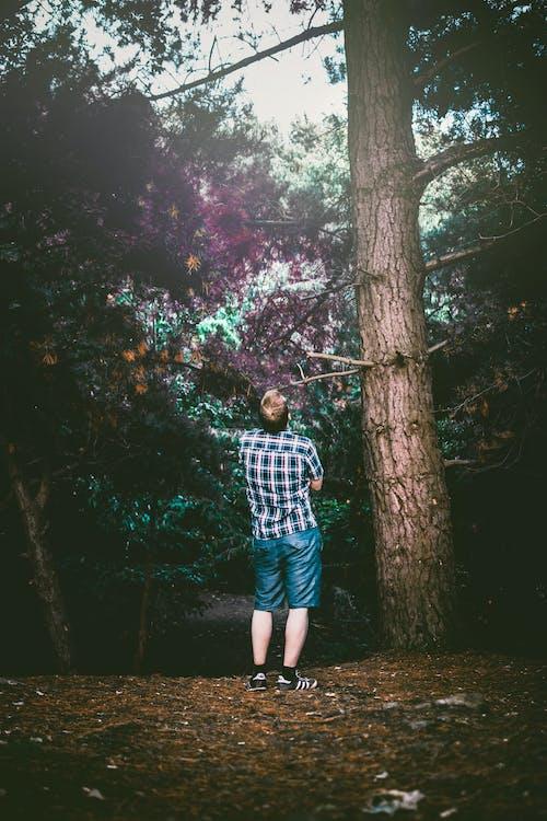 Imagine de stoc gratuită din arbori, buștean, codru, îmbracă