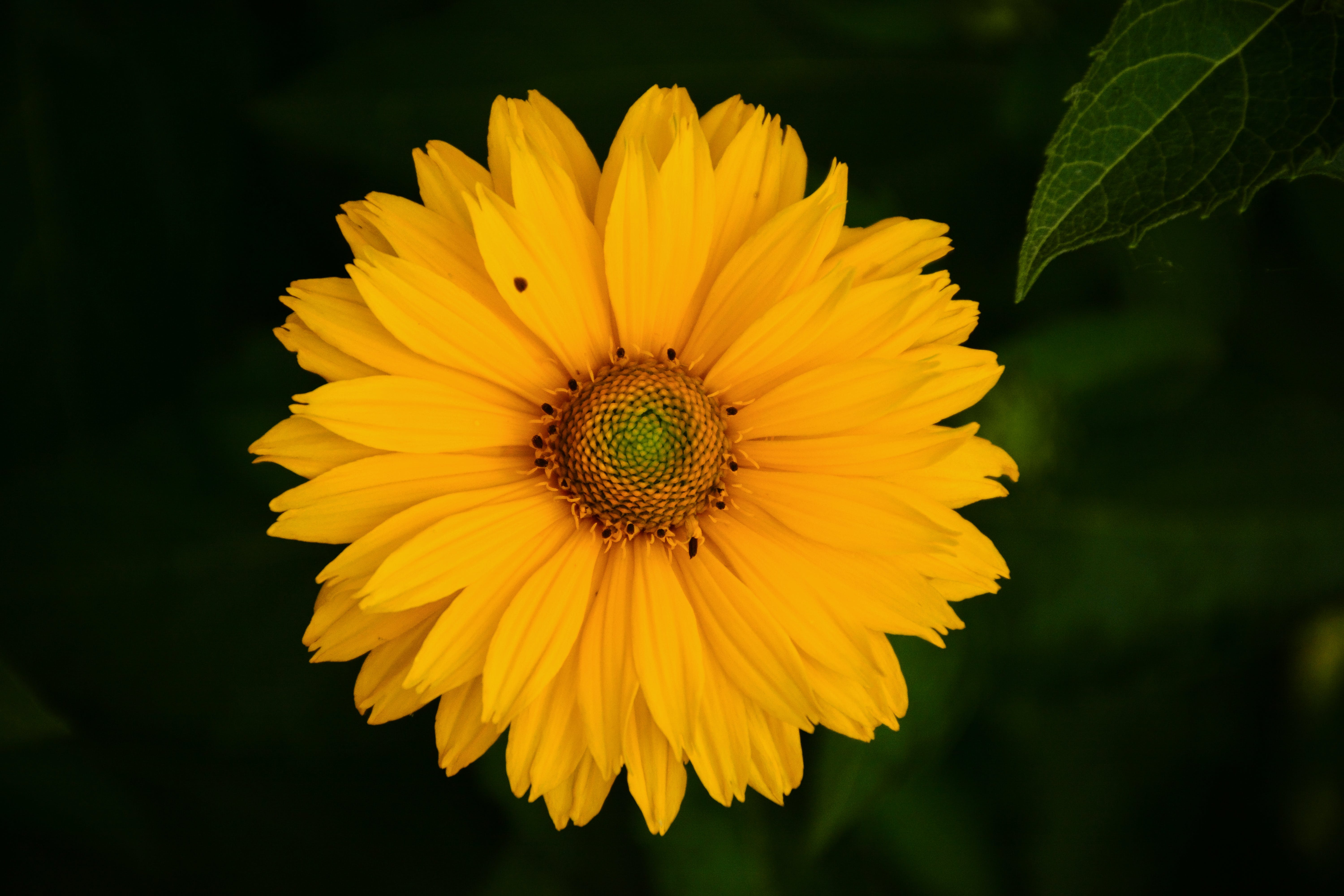 Blooming Sunflower Near Green Leaf Plant at Daytime