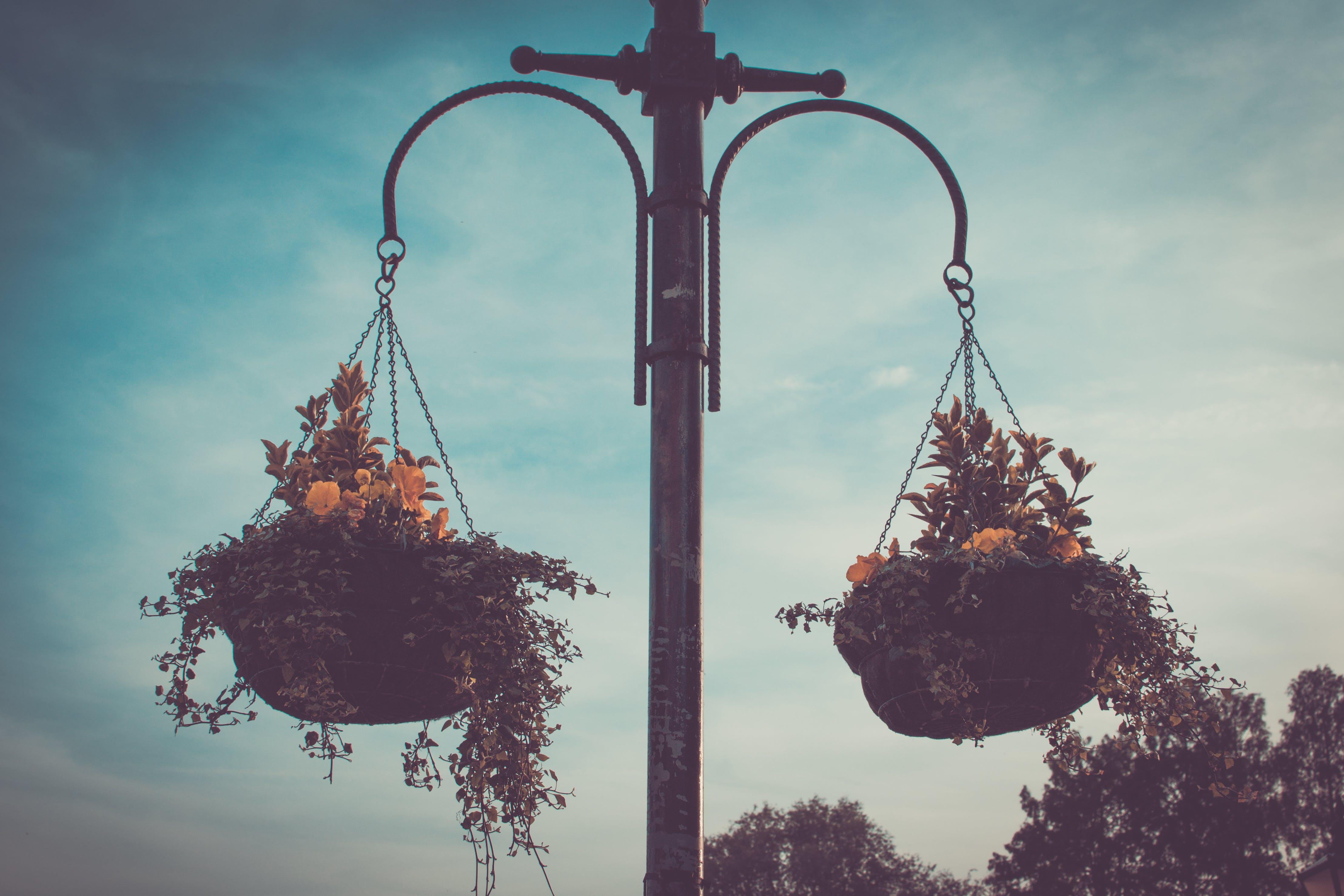Free stock photo of beautiful flowers, flower basket, flowers, hanging