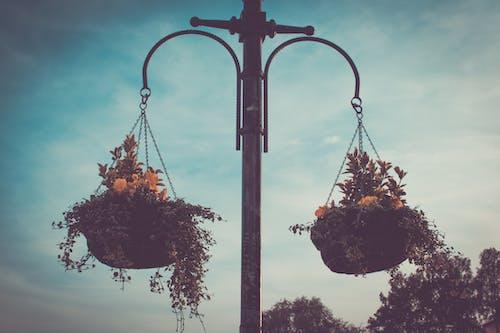 Imagine de stoc gratuită din agățat, atmosferă de vară, coș de flori, floare de vară