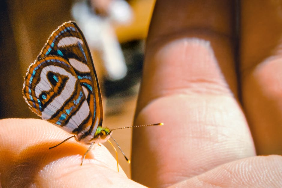 Brown gray and black butterfly perching on human finger