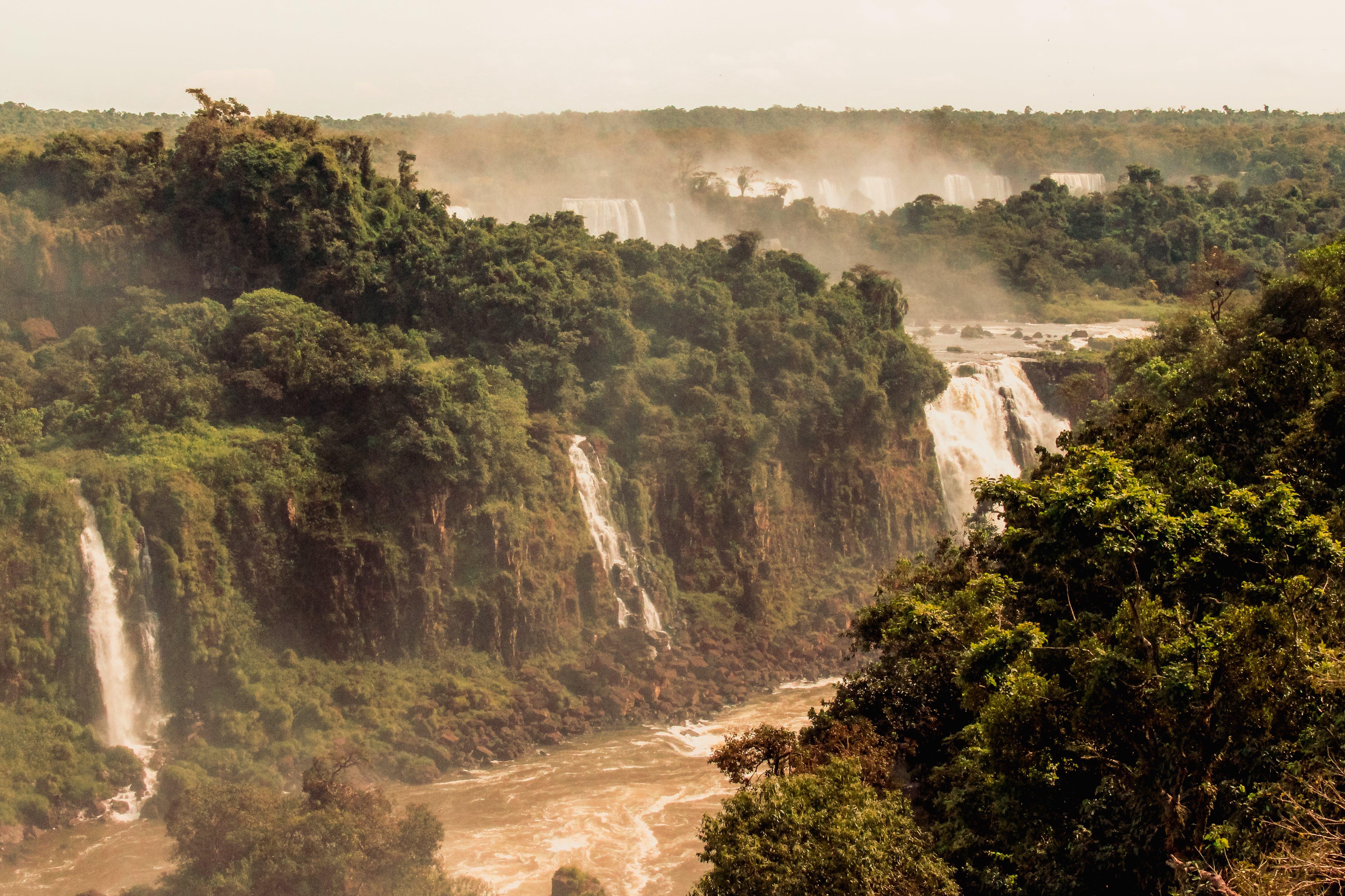Základová fotografie zdarma na téma denní světlo, dešťový prales, dobrodružství, džungle