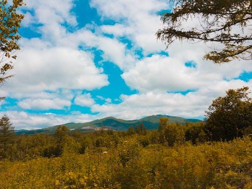 パノラマ, ライトルーム, 曇り空, 美の無料の写真素材