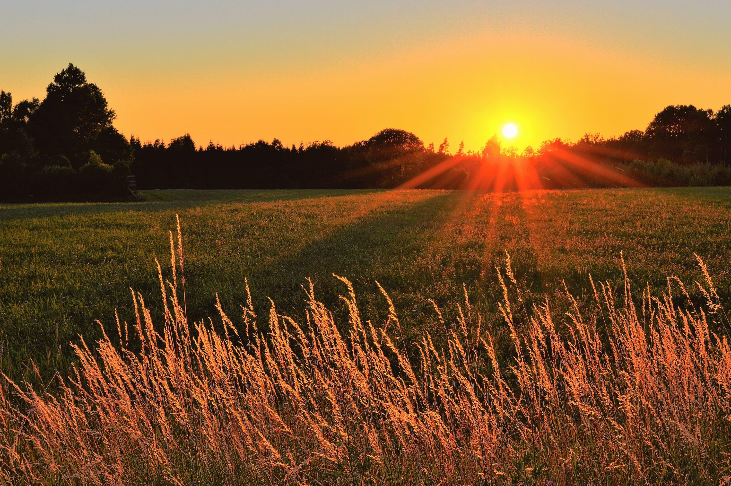 Sunray Across Green Grass Field