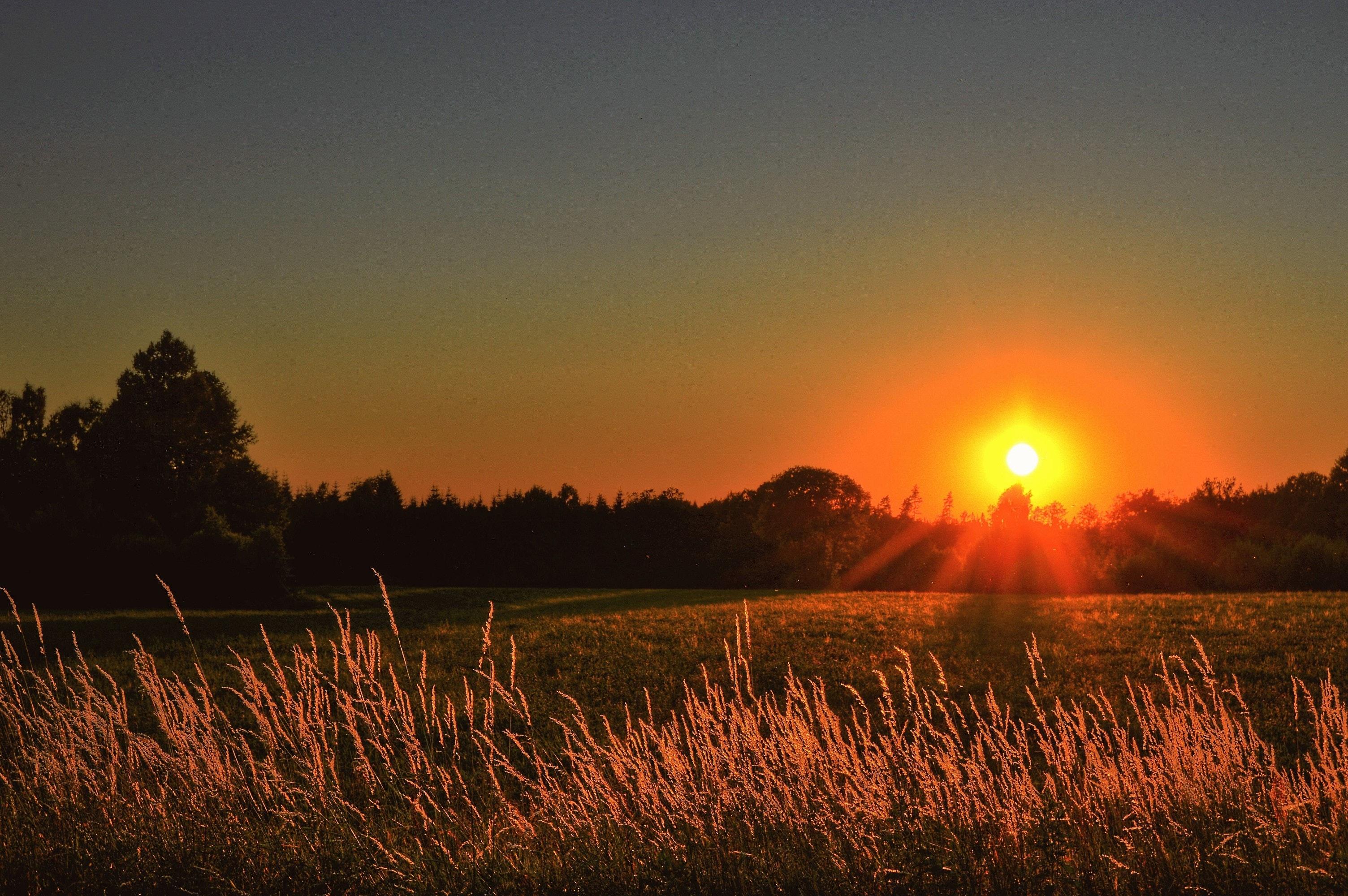 Landscape Photography Of Green Grass Field During Golden ...
