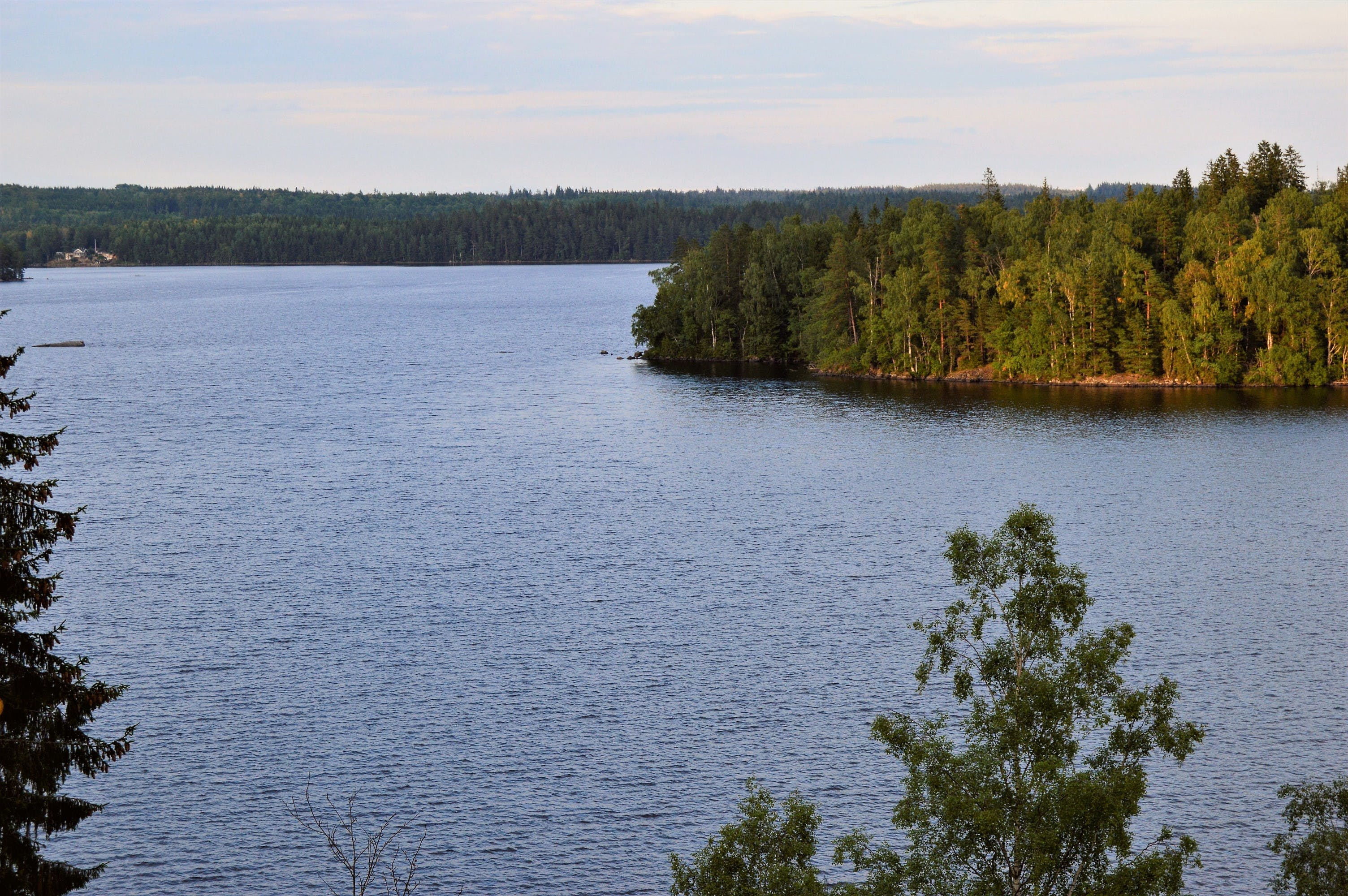 Ingyenes stockfotó erdő, fák, festői, folyópart témában