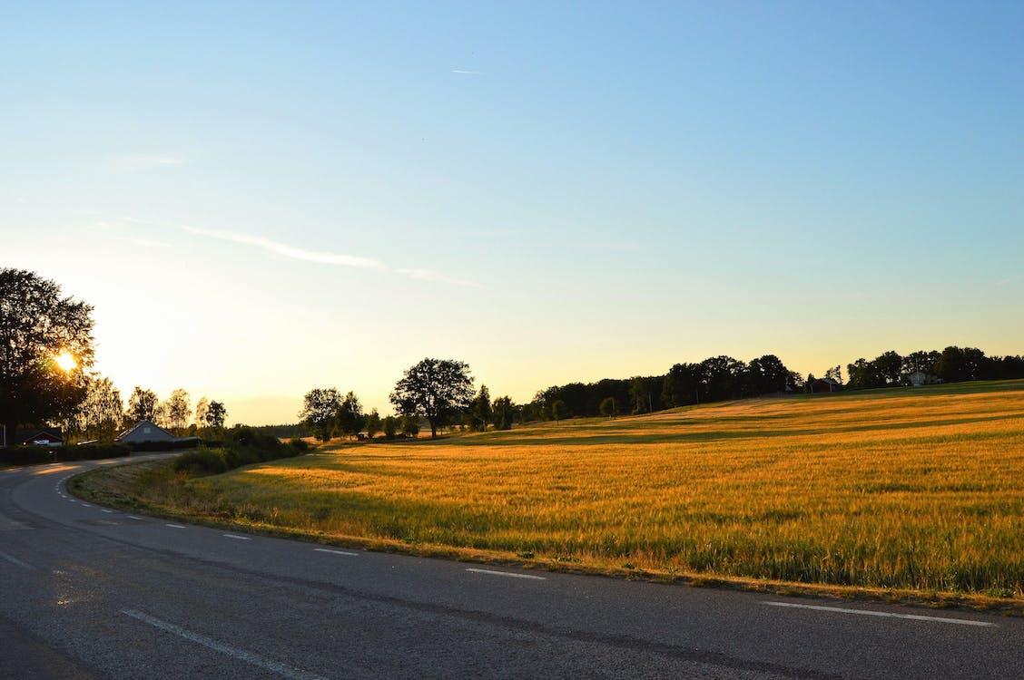 Green Grass Field Beside Asphalt Road