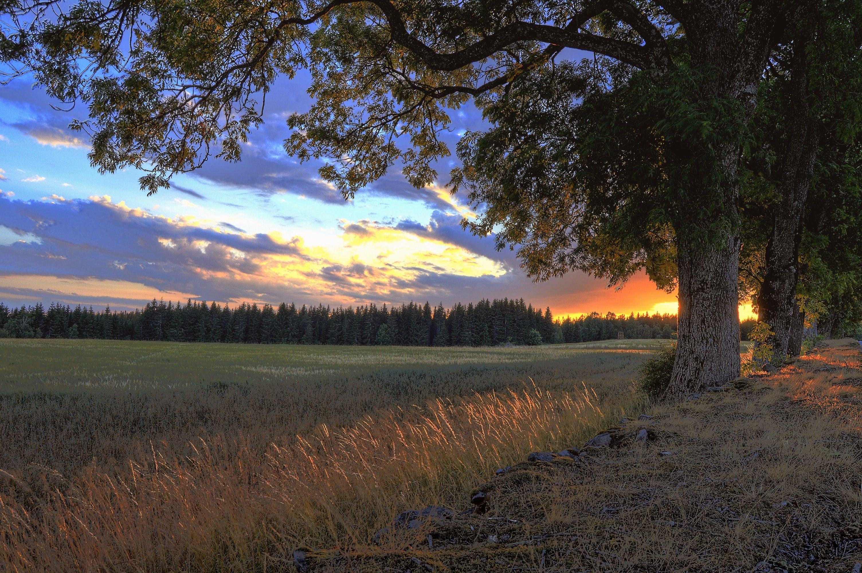 Fotos de stock gratuitas de al aire libre, amanecer, arboles, bonito