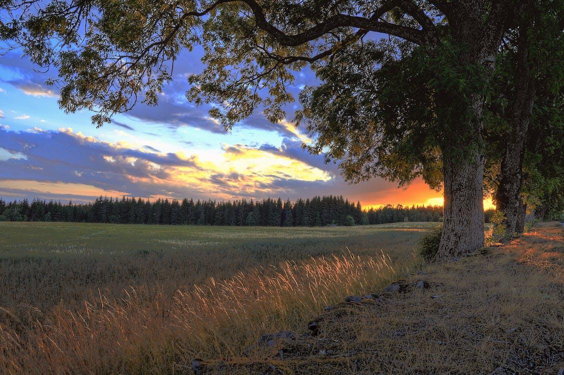 Landscape Photograph of Grass Field