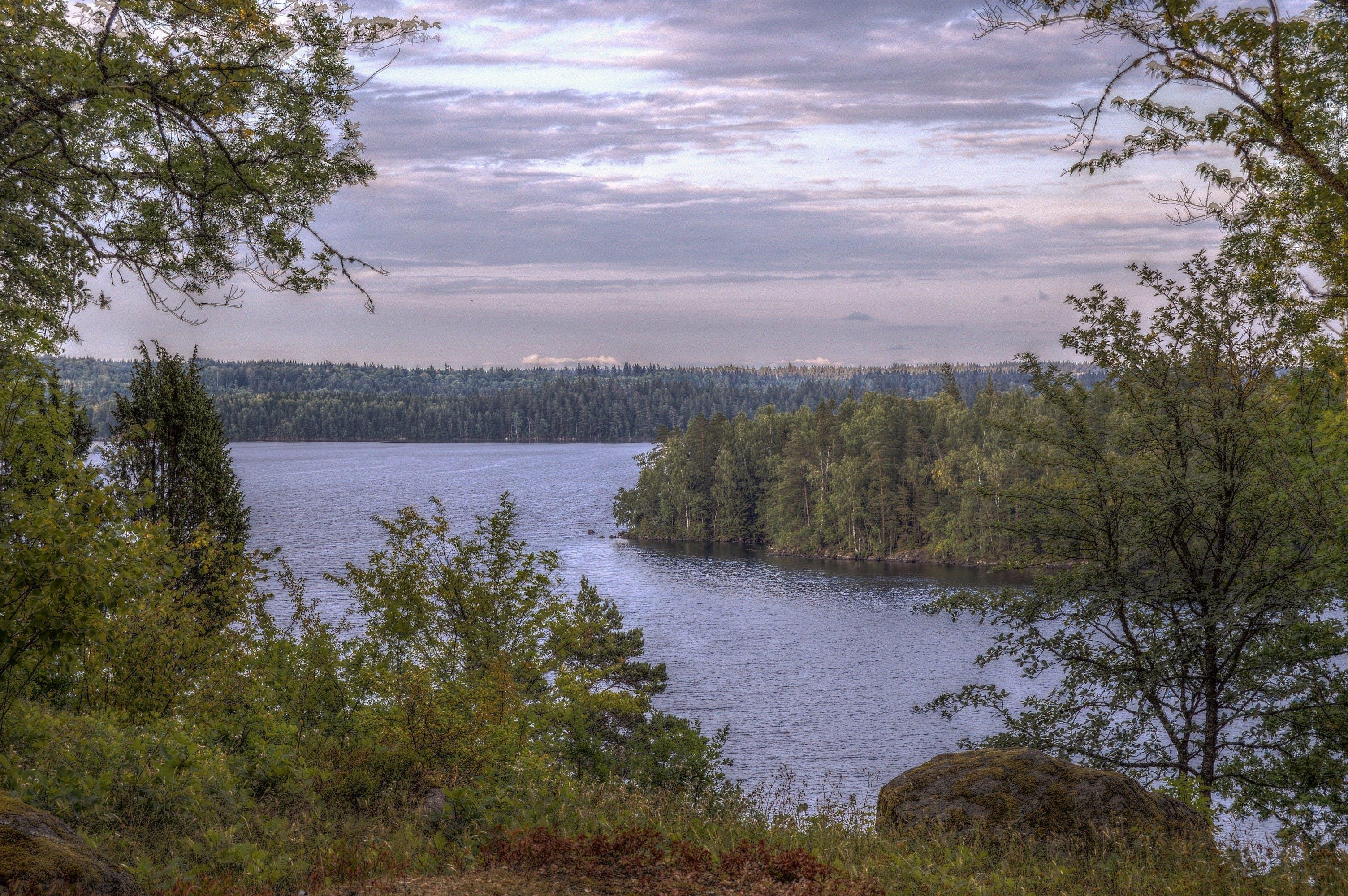 Photos gratuites de arbres, arrière-plan, aube, ciel