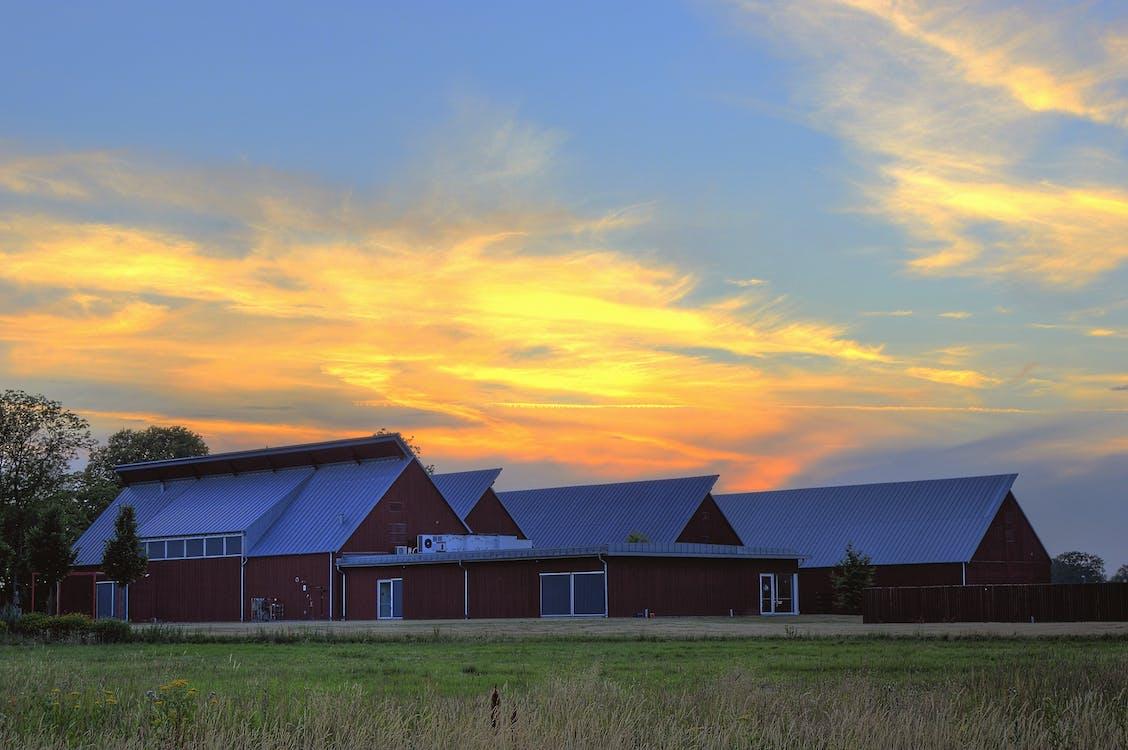 在黄金时段谷仓在草地附近的照片